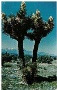 Postcard - Joshua Tree Forest National Park Near Palm Springs, California