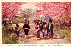 China Cherry Blossoms In Asahi-Park Chintau