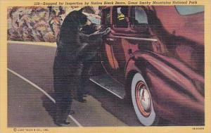 Stopped For Inspection By Native Black Bears Great Smoky Mountains National P...