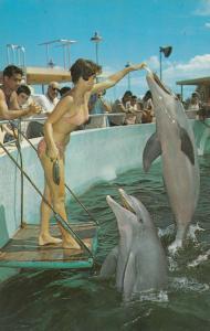 MIAMI, Florida , PU-1956 ; Woman in bikini feeding Dolphins, Seaquarium