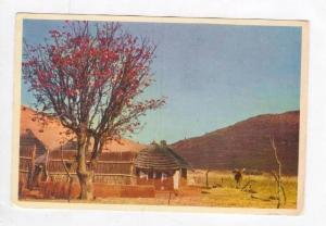 Kaffirboom & Kraal, TRANSVAAL, South Africa, 50-70s