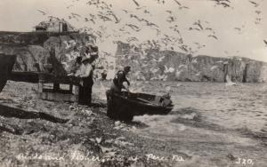RP: Birds & fishes , PERCE , Quebec , Canada , 20-40s