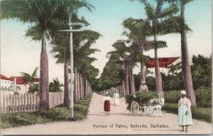 Belleville Barbados Avenue of Palms Unused Postcard F4