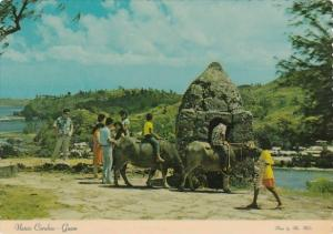 Guam Native Carabao Or Water Buffalo At Stone Sentry House At Fort Soledad