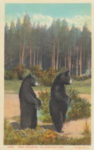 Twin Cub Bears , Yellowstone Park , 00-10s