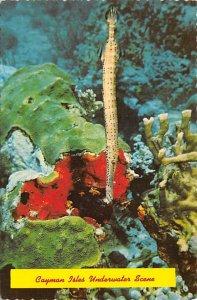 Grand Cayman Islands Post card Old Vintage Antique Postcard Cayman Isles Unde...
