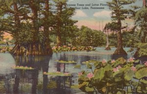 TENNESSEE, 1900-10s; Cypress Trees and Lotus Plants, Reelfoot Lake