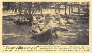 Alligator Post Card Young Alligator Joe Jacksonville, Florida, USA Unused