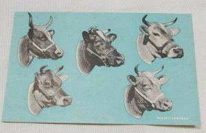 Hoard's Dairyman Cows vintage postcard collectible Very Early 1900s Scarce