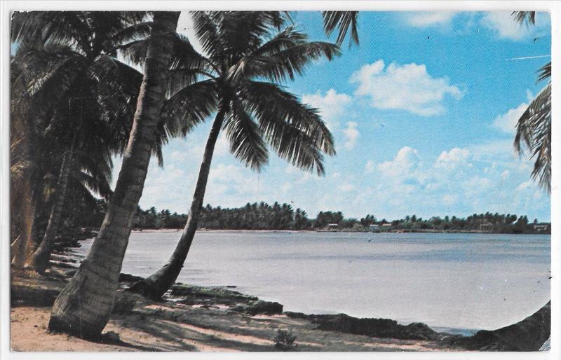 Bayahibe Beach La Romana Dominican Republic Palm Trees Island Vintage Postcard