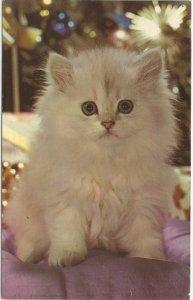 White Kitten Lil Button Eyes Vintage Postcard White Cat White Kitties 1960s