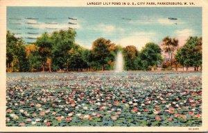 West Virginia Parkersburg City Park Largest Lily Pond In The U S 1937 Curteich