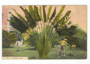 Man standing next to giant Traveller's Palm, Jamaica, 00-10s
