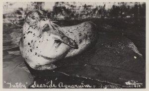 Tubby The Sea Lion Seaside Aquarium Old Cute Real Photo Postcard