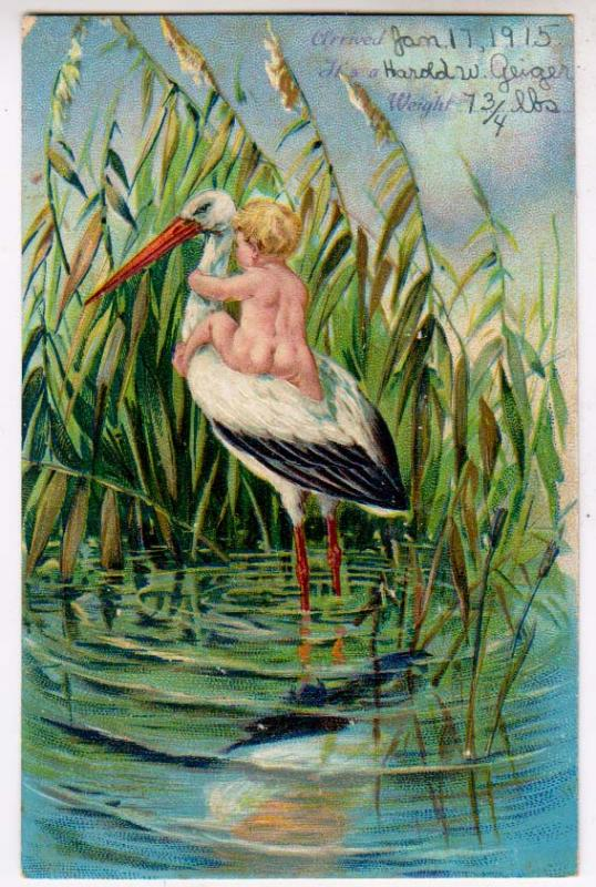 Stork with Baby in the Swamp