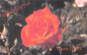 Guam Flower  Flower