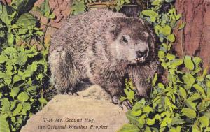 Mr. Ground Hog the Original Weather Prophet, 30-40s