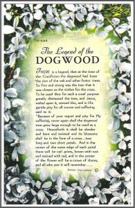 The Legend of The Dogwood Postcard - [MX-308]