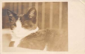 E59/ Interesting Real Photo RPPC Postcard c1910 Unique Sleeping Cat Eye 8