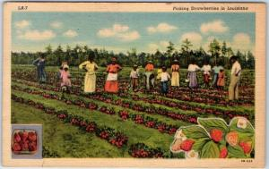 Louisiana Agriculture Postcard Picking Strawberries Black Workers Linen 1954