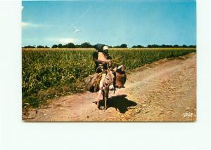 Postcard Haiti Farming Native Burro Plantations Port Au Prince   # 4167A
