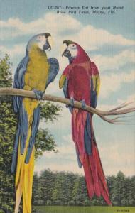 Florida Miami Colorful Macaws Rare Bird Farm
