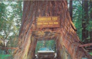 California Leggett Chandelier Drive Thru Tree