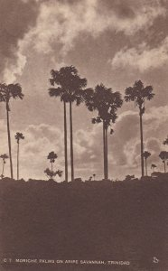 TRINIDAD , 00-10s ; Moriche Palms