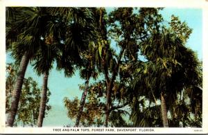 Florida Davenport Forest Park Tree and Palm Tops