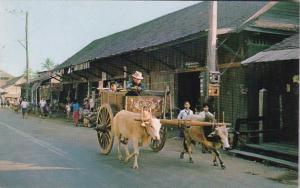 Thailand Bangkok Farmers With Ox Carts Going To Produce Market