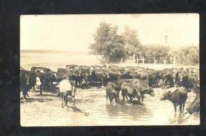 RPPC TRIBUNE KANSAS FARM SCENE COWS IN WATER VINTAGE REAL PHOTO POSTCARD 1908