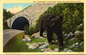 Bear Hitch-Hiker In The Great Smoky Mountaians National Park Curt...
