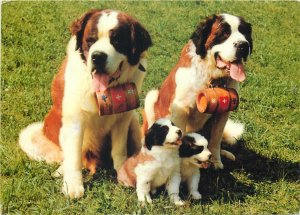 France tongue st bernard grass puppies dog Postcard