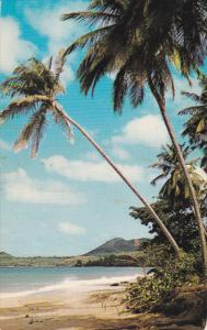 Coconut Palmsshelter on white sand, Vigile Beach, ST. LUCIA, West Indies, 40-60s