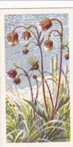 Brooke Bond Tea Trade Card Wild Flowers No 14 Water Avens