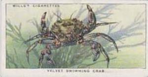 Wills Vintage Cigarette Card The Sea-Shore No 29 Velvet Swimming Crab  1938