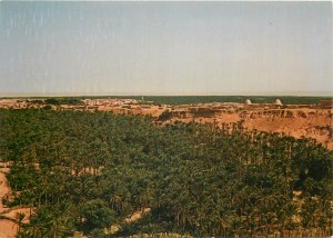 Tunisia nefta l'oasis Postcard