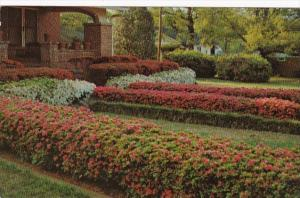 Mississippi McComb Residential Scene With Flowers