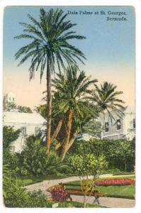 Date Palms At St. Georges, Bermuda, 1900-1910s