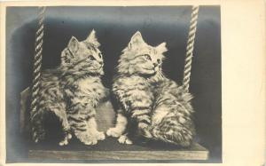 Taber Studio Real Photo Cat PC; Grey or Silver Tabby Persian Kittens on Swing