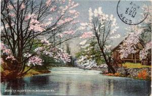 Spring Flowering Trees at Allens Creek - Rochester, New York - DPO 1911 - DB