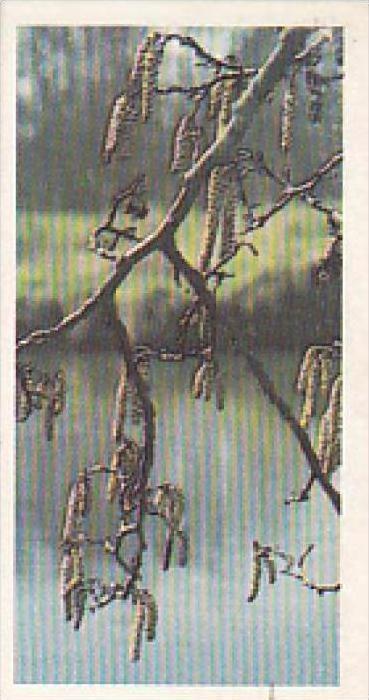 Brooke Bond Vintage Trade Card Woodland Wildlife 1980 No 16 Alder