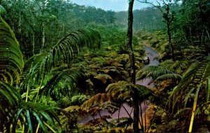 Hawaii National Forest Fern Forest