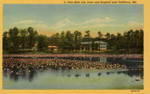 MD - Salisbury. Pine Bluff Lily Pond and Hospital