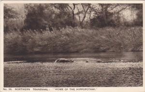 Northern Transvaal : Home Of The Hippopotami, South Africa, 1910-1920s