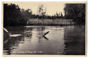 Salmon Jumping, Gaspe PQ