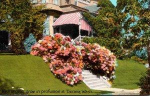 Washington Tacoma Residence Scene With Beautiful Hydrangeas