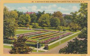 New York Rochester A Section Of Rose Gardens Maplewood Park 1978