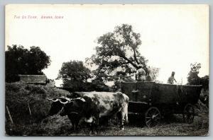 Amana Iowa~Ox Team Pull Big Farm Wagon~Farmers Inside Pitching Hay~c1910 B&W PC