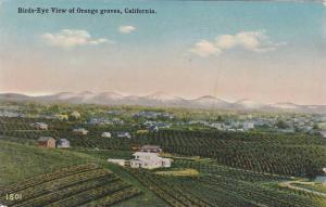 Birds-eye view of Orange groves,  California,   00-10s